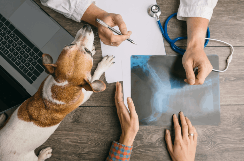 Discover Where to Find Veterinarian Job Vacancies